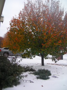 Our poor confused tree, stuck between seasons.